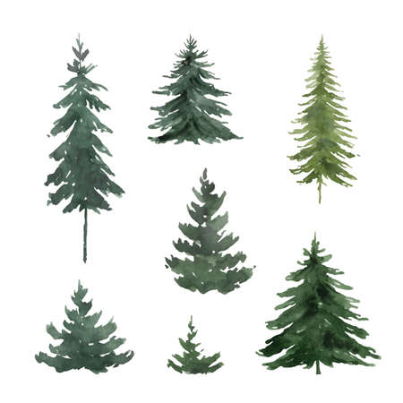 Watercolor vector set with green fir trees.