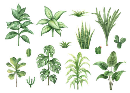 Watercolor vector set with home plants isolated on white background.