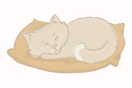 Gray cat sleeping on a pillow.