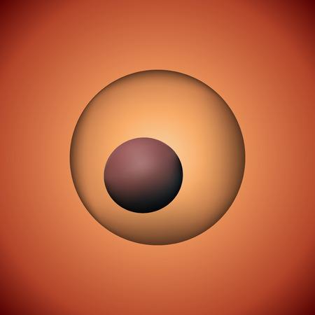 fertilization: One fertilized zygote vector illustration. 3D image of reproductive development.