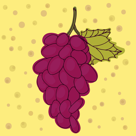 Red grapes vector illustration. Cherry hand drawn. Sweet vegetarian food, Illustration