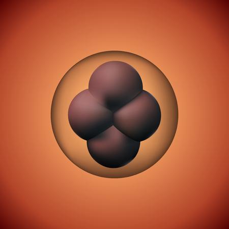 Zygote human vector illustration. 3D image reproduction development. Illustration