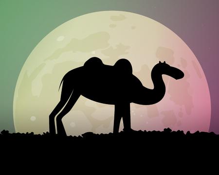 Camel in the evening desert.