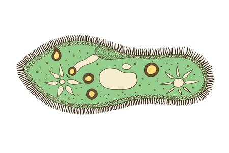 Infusoria bacteria icon illustration. Illustration