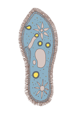 Infusoria slipper.