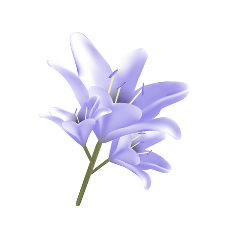 Bouquet of blue lilies. Vector illustration. Beautiful flowers