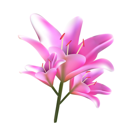 Bouquet of pink lilies. Vector illustration. Beautiful flowers