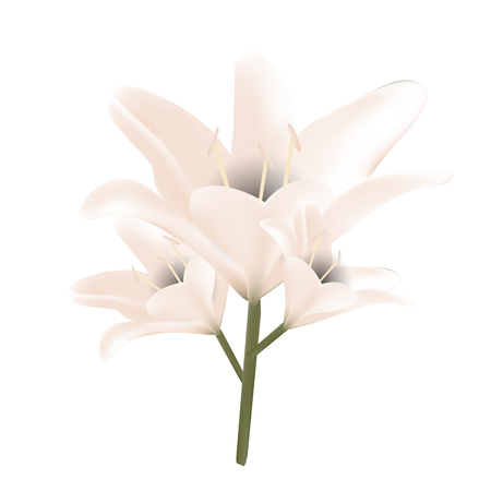 Bouquet of pastel lilies. Vector illustration. Beautiful flowers