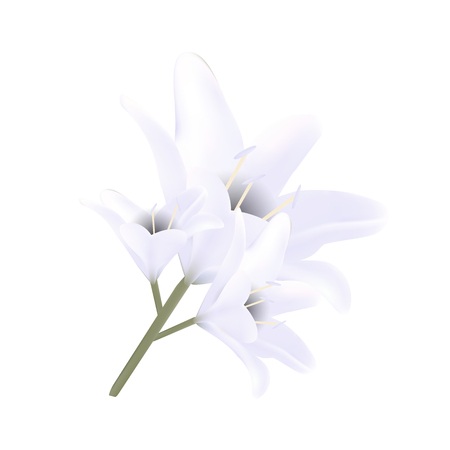 Bouquet of white lilies. Vector illustration. Beautiful flowers