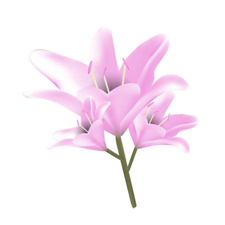 Bouquet of pastel pink lilies. Vector illustration. Beautiful flowers