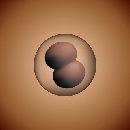 Fertilized egg. Vector I illustration. Science biology medicine