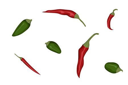Green jalapeno and red hot chillies. Vector illustration. Spicy vegetable.