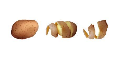 Peeled tuber potatoes set. Vector illustration Vegetarian food