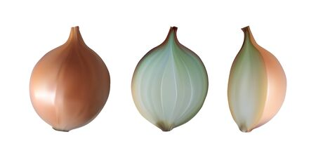 Onion half and whole. Vegetarian food set. White background. Vector illustration.