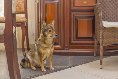 Adorable young dog sitting alone. Obedient domestic animal.