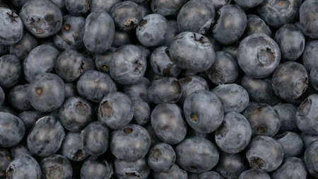 Raw blueberry background. Organic food, blue berry crop Banco de Imagens