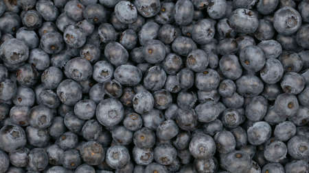 Raw blueberry background. Vegan food, blue berry crop