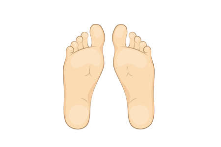 Vector illustration of a mans soles. feet, sole, body part. 矢量图像