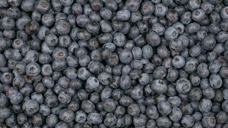 Raw blueberry background. Vegetarian food, blue berry crop