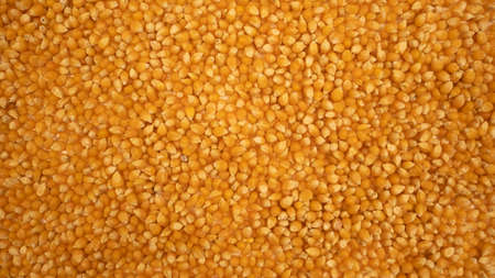 Popcorn maize background. Dry corn. Healthy eating. Yellow grain agriculture
