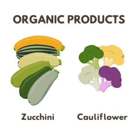 Organic products vector illustration. Yellow and green zucchini set. Yellow, white and red cauliflower, green broccoli.