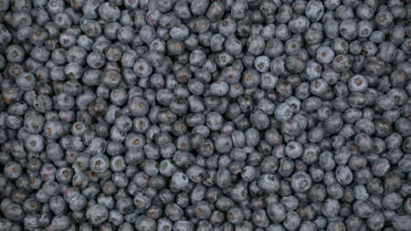 Raw blueberry background, the blue berry crop Archivio Fotografico