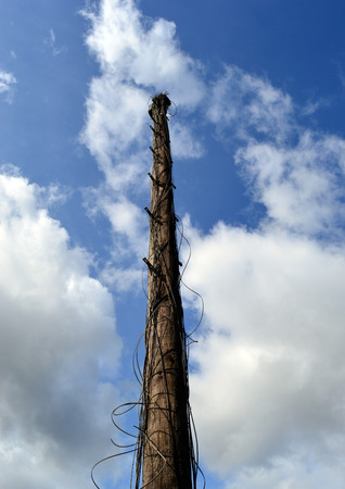 telephone pole: an old disused telephone pole with tangles od old wiring