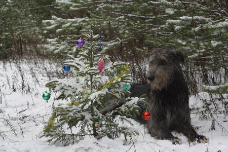 frippery: dog near the Christmas tree
