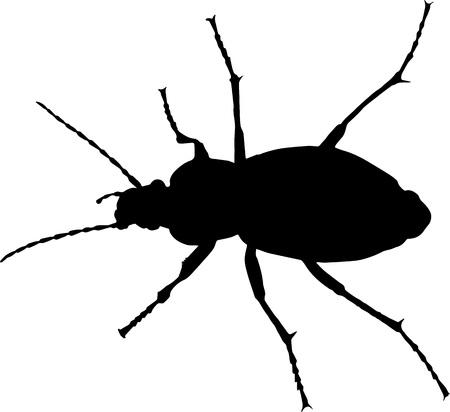 silhoette: Ground beetle (Carabus granulatus) vector silhoette