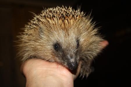 spiny: spiny hedgehog on palm