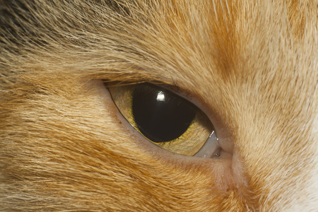 yellow eye of cat closeup 写真素材
