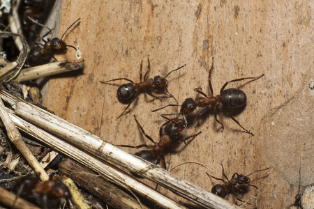 ants on wooden plank closeup 写真素材