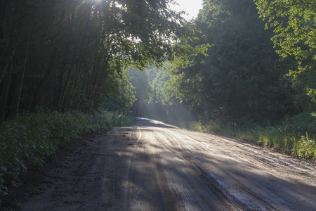 sun rays on ground road through forest 写真素材
