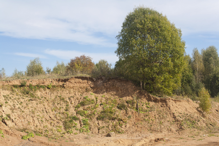 few trees over a sandy cliff rural landscape