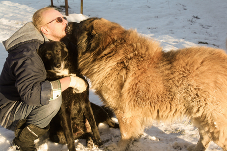 two big dogs kiss their owner 写真素材