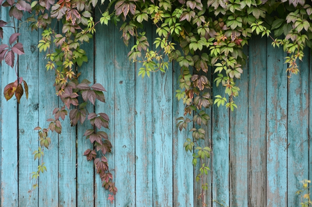 The pattern of colored autumn leaves with wooden fence Stok Fotoğraf