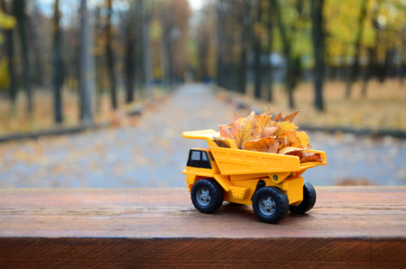The concept of seasonal harvesting of autumn fallen leaves is depicted in the form of a toy yellow truck loaded with leaves against the background of the autumn park