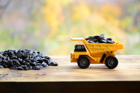 A small yellow toy truck is loaded with sunflower seeds next to a small pile of sunflower seeds. A car on a wooden surface against a background of autumn forest. Transportation of sunflower seeds Stock Photo