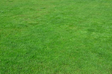 Photo of the site with even-cropped green grass. Lawn or alley of fresh green grass