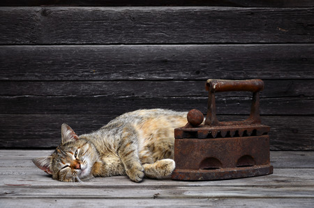 A multi-colored thick cat is located next to a heavy and rusty old coal iron on a wooden surface against a wall of black horizontal wooden boards. Obsolete device for ironing clothes and pet