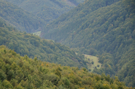 Fragment of the mountainous terrain in the Carpathians, Ukraine. The forest is forgiven by the reliefs of the Carpathian Mountains Stock Photo