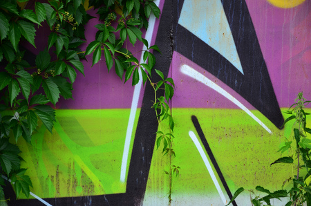 A detailed image of a colored graffiti drawing, which is overgrown in the thickets of ivy. Background street art picture Фото со стока