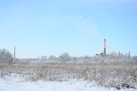 The industrial plant is located behind the swampy terrain, covered with snow. Large field of yellow bulrushes