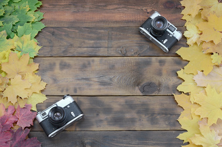 Two old cameras among a set of yellowing fallen autumn leaves on a background surface of natural wooden boards of dark brown color 版權商用圖片