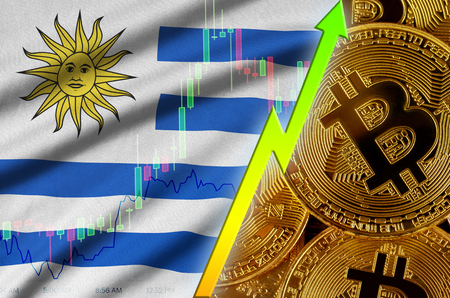 Uruguay flag  and cryptocurrency growing trend with many golden bitcoins. Concept of raising Bitcoin in price or high conversion in cryptocurrency mining 免版税图像