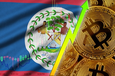 Belize flag  and cryptocurrency growing trend with many golden bitcoins. Concept of raising Bitcoin in price or high conversion in cryptocurrency mining