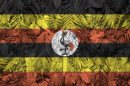 Uganda flag depicted on many leafs of monstera palm trees. Trendy fashionable background