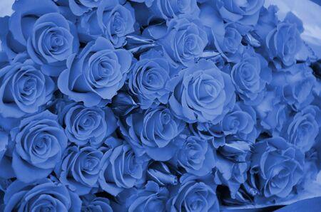 Close up of bright bunch of freshly cut big beautiful roses. phantom classic blue color Фото со стока