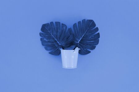 Tropical palm monstera leaf lies in a pastel pail on phantom classic blue background. Flat lay trendy minimal composition. Top view.