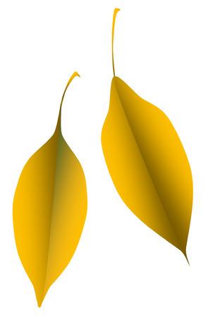calendula:  2 orange leaves leaf